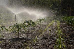 sprinkler system efficiency, How To Increase the Efficiency of Your Sprinkler System